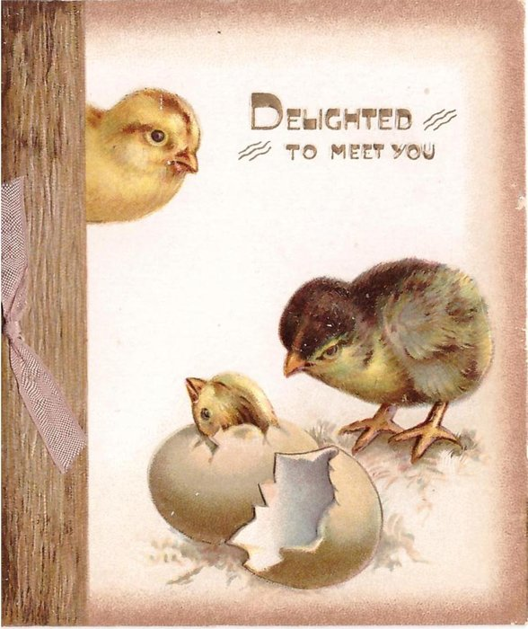 DELIGHTED TO MEET YOU in gilt, chick hatches out of egg, another two look on
