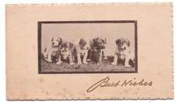 BEST WISHES in gilt below black & white inset of 5 puppies