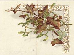 no front title, mistletoe & ivy across both back flaps, designed border on front, pale green background