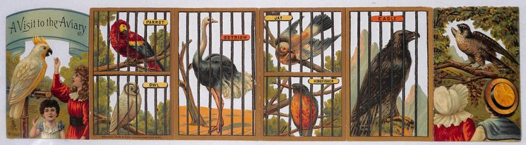 A VISIT TO THE AVIARY
