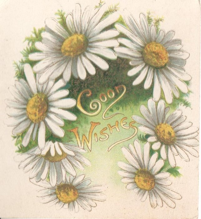 GOOD WISHES within ring of white daisies with yellow centres