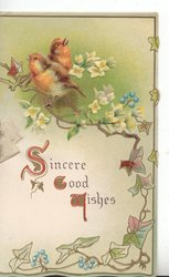 SINCERE GOOD WISHES two English robins perched on branch looking opposite directions