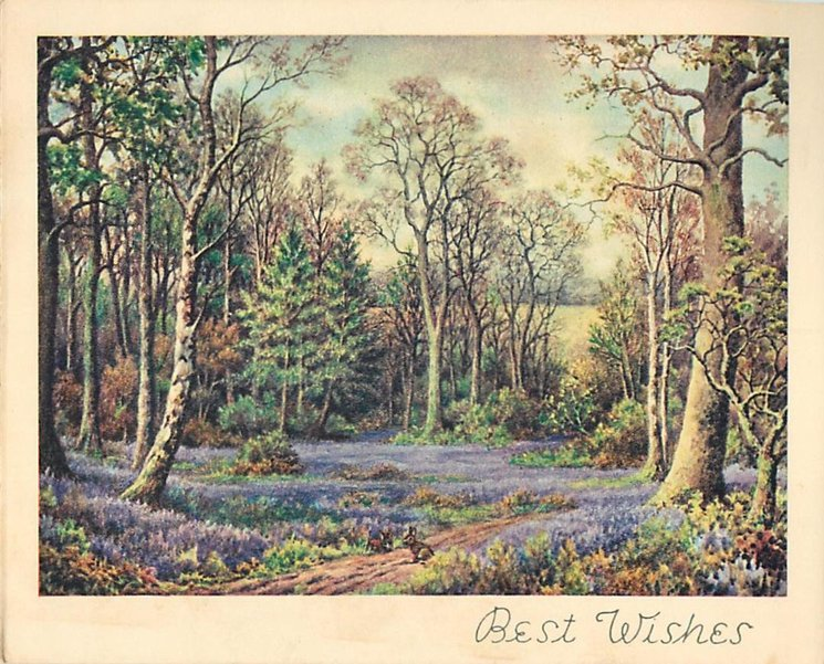 BEST WISHES  inset forest meadow with blanket of purple flowers