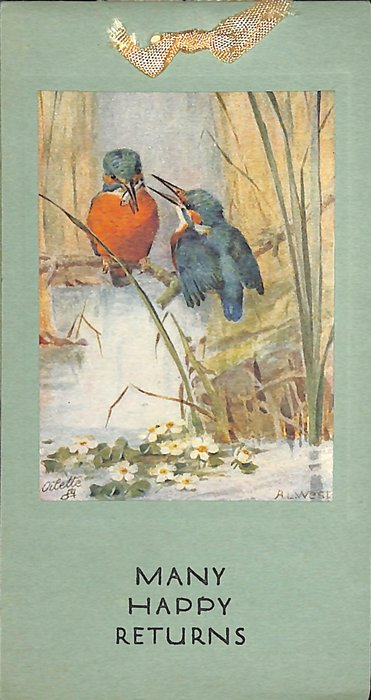 kingfishers on branch above stream