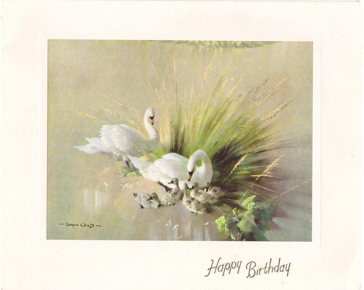 HAPPY BIRTHDAY in gilt below inset of 2 swans & 5 cygnets