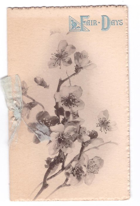 FAIR DAYS opt. in blue above cherry blossoms, shades of grey/black