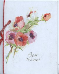 BEST WISHES below pink anemones