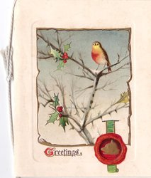 GREETINGS (G illuminated) single robin perched on holly tree