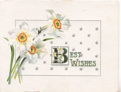 BEST WISHES in gilt lower right(B illuminated) 3 narcissi left