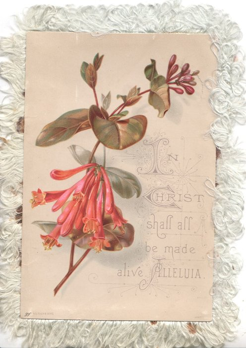 IN CHRIST SHALL ALL BE MADE ALIVE  ALLELULIA pink trumpet flower left