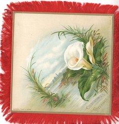 CHRISTMAS GREETINGS below, arum lily, view across lake