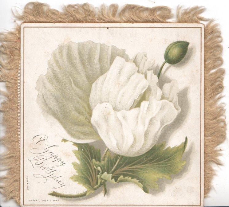 A HAPPY BIRTHDAY below white anemone flower, bud & leaves