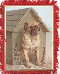 A HAPPY CHRISTMAS TO YOU mastiff chained in kennel