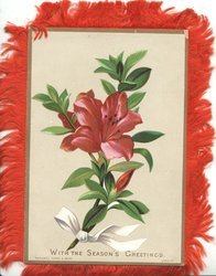 WITH THE SEASONS GREETINGS below red lily tied with white ribbon at base