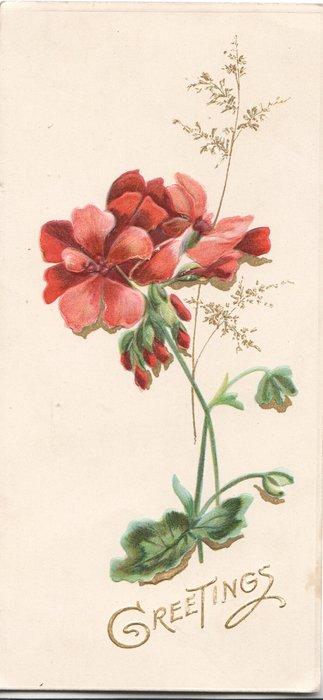 GREETINGS in gilt below red geraniums
