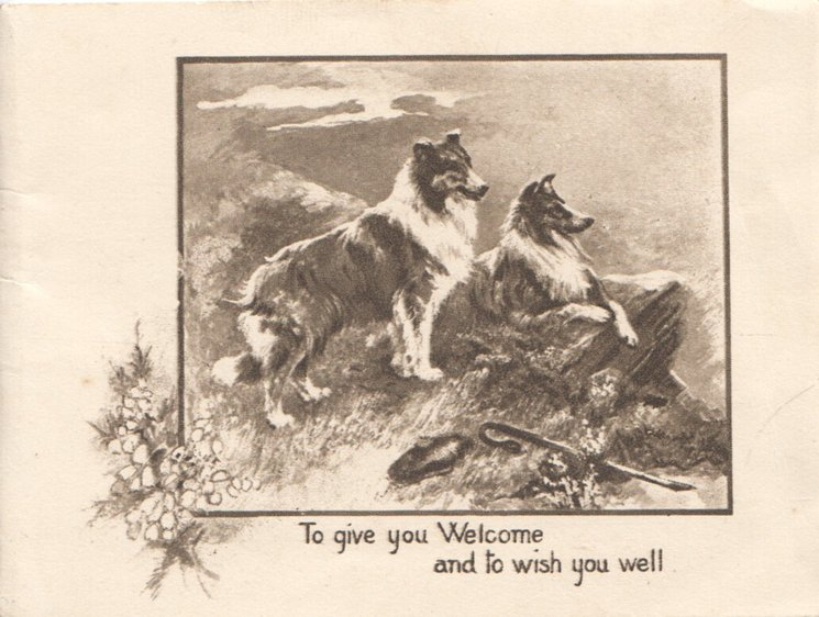 TO GIVE YOU WELCOME AND TO WISH YOU WELL 2 sheep dogs wait on hillside, above stylized heather