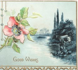 GOOD WISHES below pale pink wild rose left over deep blue watery rural inset