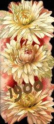 1900 three white chrysanthemums