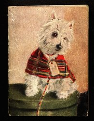 white Scottie dog with red coat and gift tag