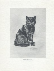 THE BEST OF LUCK seated black cat