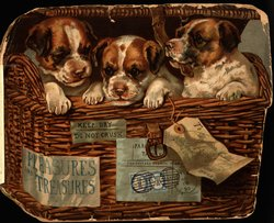 PLEASURES AND TREASURES (title inner front cover) three puppies in a wicker basket