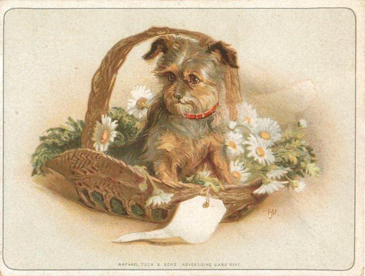 RAPHAEL TUCK & SONS ADVERTISING CARD DEPT. front at base, dog in basket