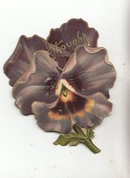 THOUGHTS in gilt on top and back of purple pansy