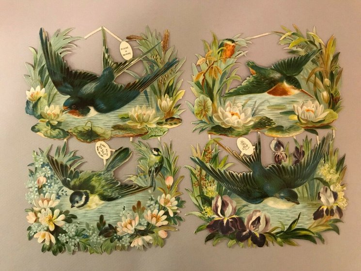 individual birds flying low over water, each different and each framed by plants and flowers