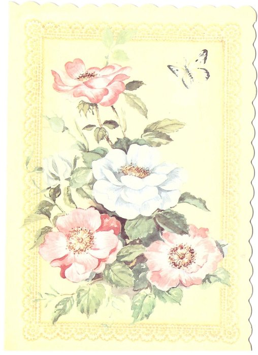 no front title, pink & white roses, butterfly