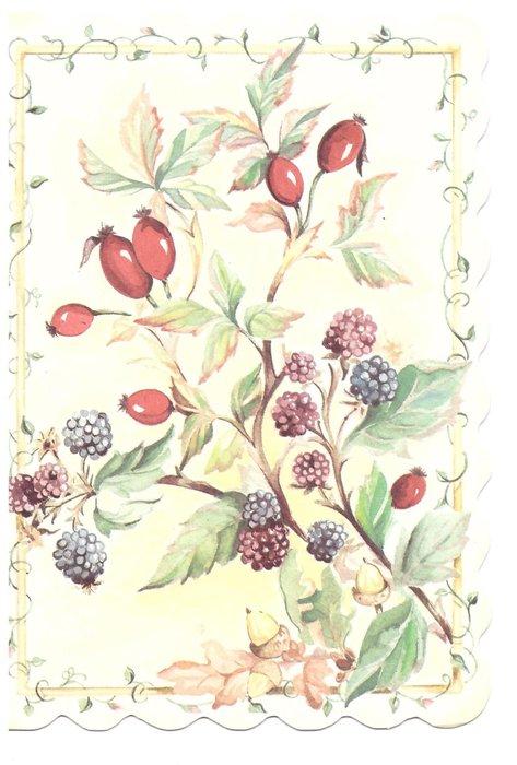 no front title, blackberries & rosehips