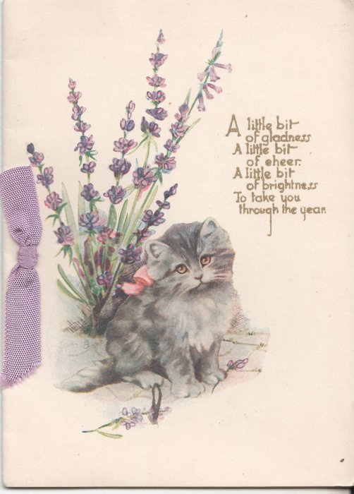 A LITTLE BIT OF GLADNESS A LITTLE BIT OF CHEER A LITTLE BIT OF BRIGHTNESS TO TAKE YOU THROUGH THE YEAR cat sits in front of lavender plant