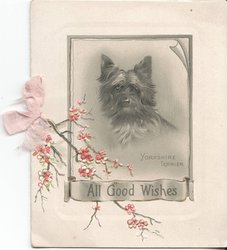 ALL GOOD WISHES - YORKSHIRE TERRIER in frame, flowers coming from left