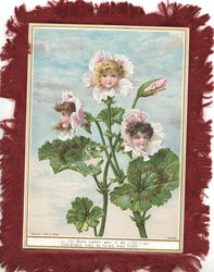 VERY HAPPY MAY IT BE CHRISTMAS TIME TO THINE AND THEE! 4 geranium style flower faces/buds