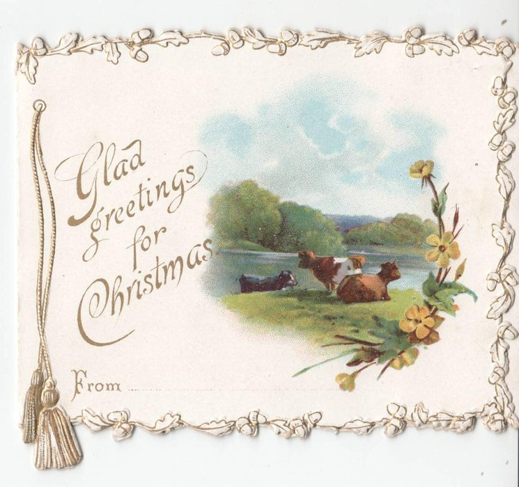GLAD GREETINGS FOR CHRISTMAS three cows sit by river, yellow flowers to right of card