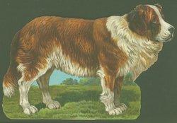 THE ST. BERNARD DOG
