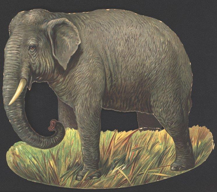DER ELEPHANT