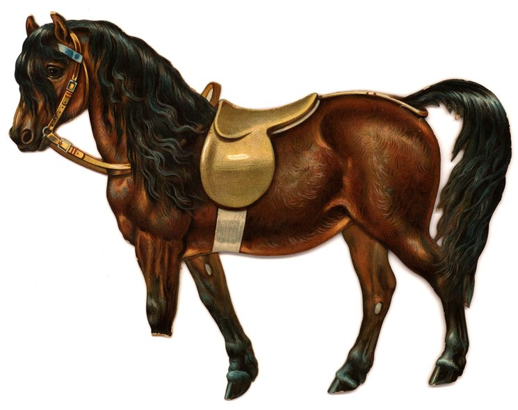 brown horse standing with empty saddle