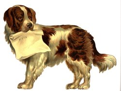 Dog, St. Bernard