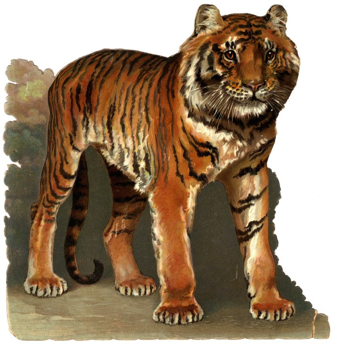 THE TERROR OF THE JUNGLE (TIGER)