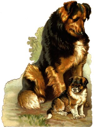 COLLIE AND PUP