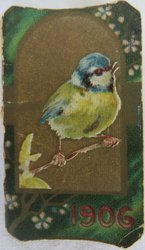 1906 blue tit bird
