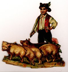 young boy herds pigs