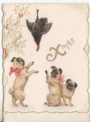 XMAS three pugs paw at hanging turkey, holly to left