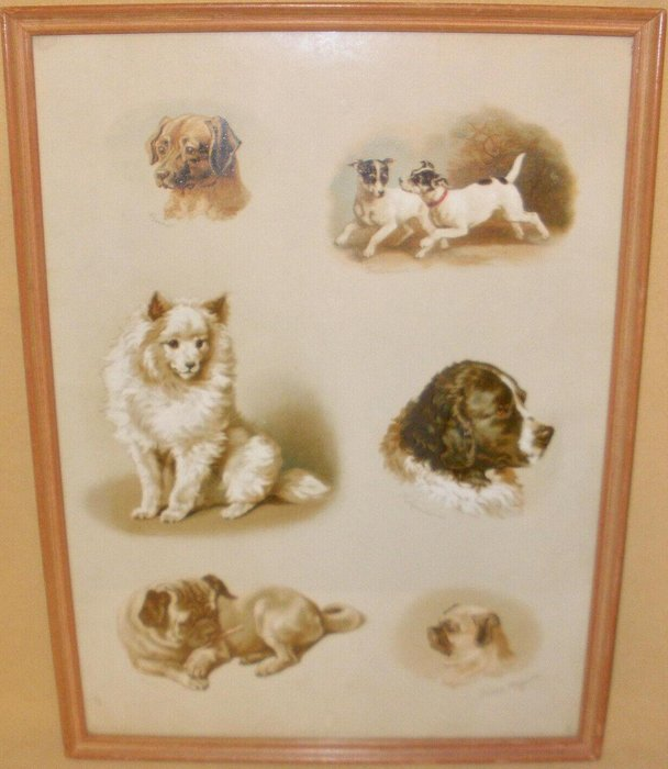 six different images of dogs