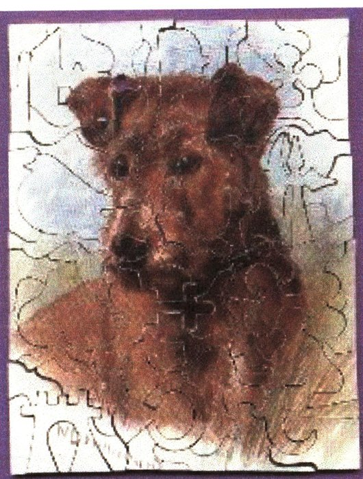 MY FRIEND PAT, Terrier type dog or Airedale