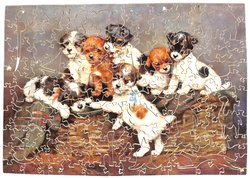 WE ARE SEVEN, seven terriers style puppies in a basket
