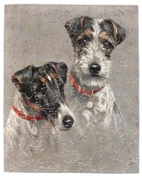 ROUGH READY, ROUGH SMOOTH HAIRED TERRIERS, head and neck of two terrier dogs, both wear brown collars