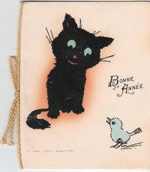 BONNE ANNEE black cat looks at small blue bird