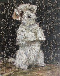 A WINNER OF HEARTS, white terrier type dog sits up and begs