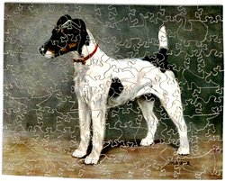 JACK (FOX TERRIER), white dog with black spots wearing a thin red collar stands facing left